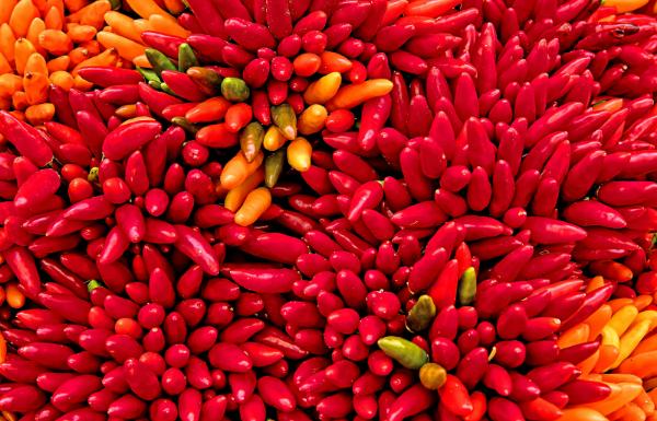 Chine Chilli Sauce